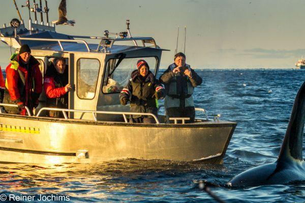 MS BOAT C 690 FISHING
